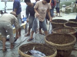 tempat pelelangan ikan di tamperan